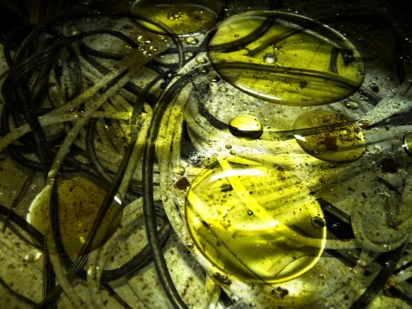 http://cri-me.cowblog.fr/images/soupedecable.jpg